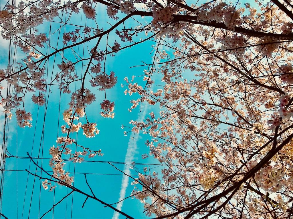 f:id:tomokusa_mei:20180326204510j:image