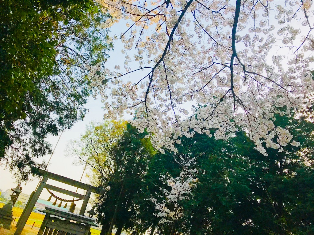 f:id:tomokusa_mei:20180410223002j:image
