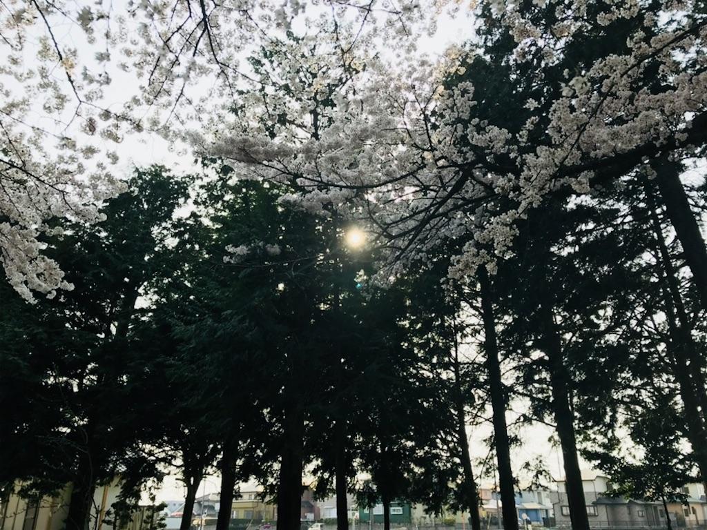 f:id:tomokusa_mei:20180410223350j:image