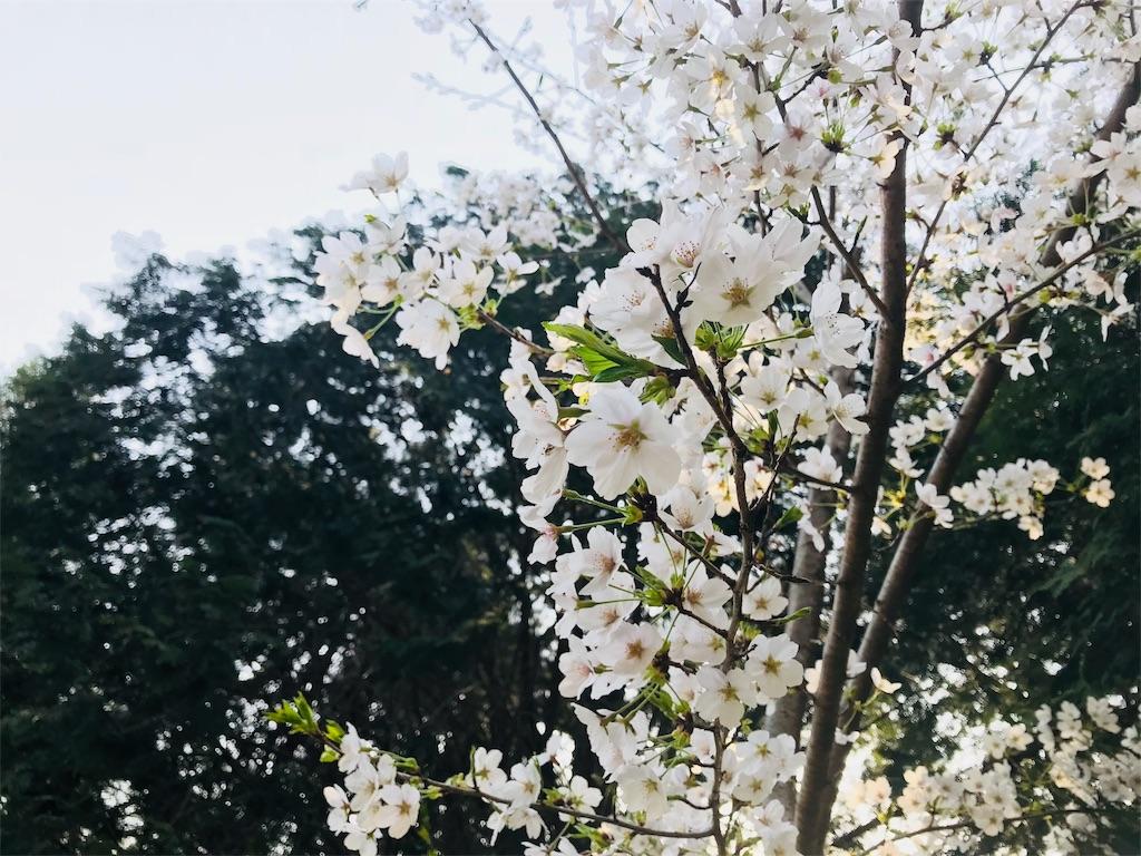 f:id:tomokusa_mei:20180410223433j:image