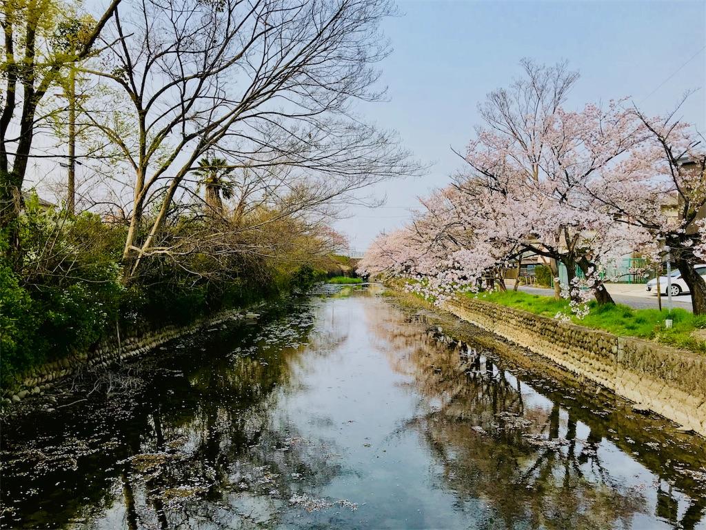 f:id:tomokusa_mei:20180413201010j:image