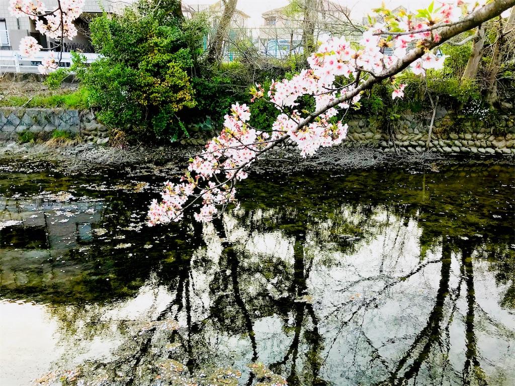 f:id:tomokusa_mei:20180413204007j:image