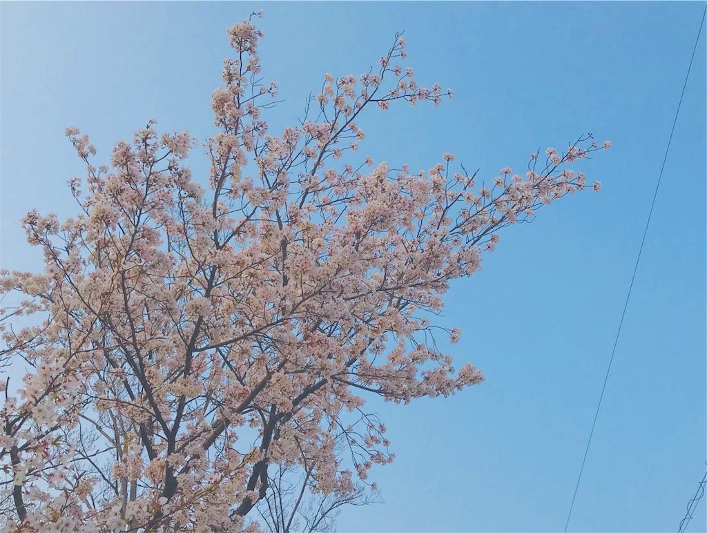 f:id:tomokusa_mei:20180413204026j:image