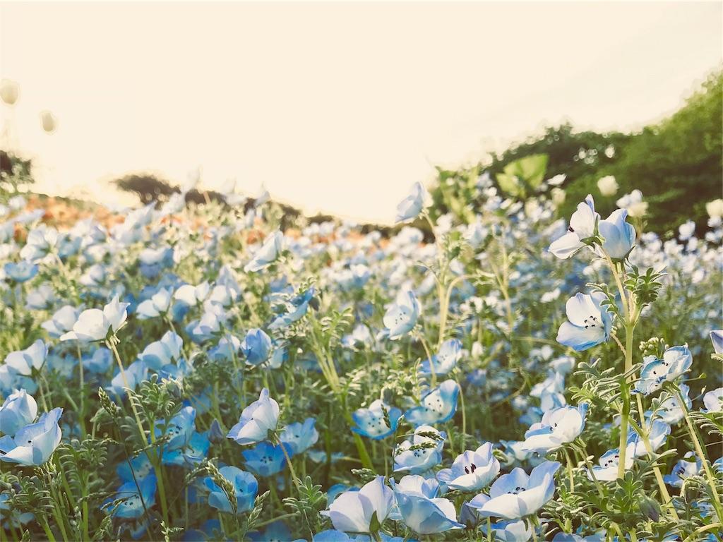 f:id:tomokusa_mei:20180427093053j:image