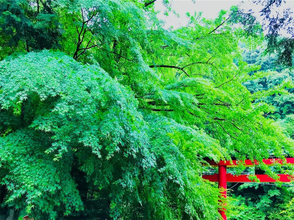 f:id:tomokusa_mei:20180622132013j:image