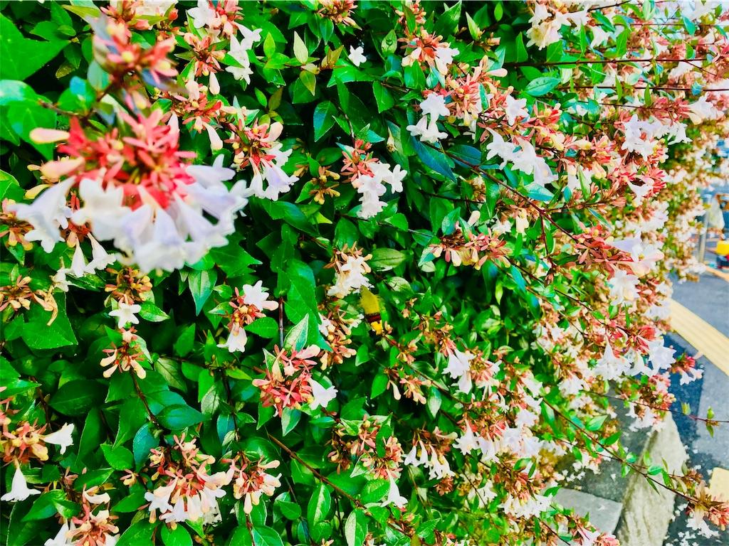 f:id:tomokusa_mei:20180629160639j:image