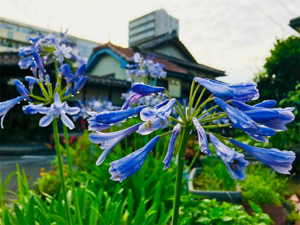 f:id:tomokusa_mei:20180629160656j:image