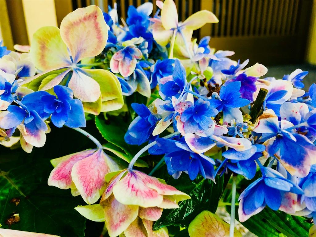 f:id:tomokusa_mei:20180629160709j:image