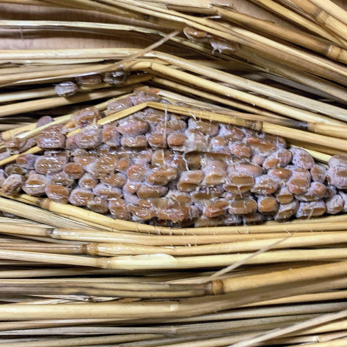 だるま食品「わら納豆」の、藁の中の納豆の画像
