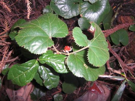 f:id:tomotsaan:20100130121848j:image:w240
