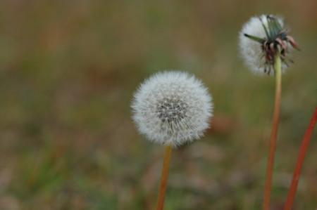 f:id:tomotsaan:20120122101033j:image