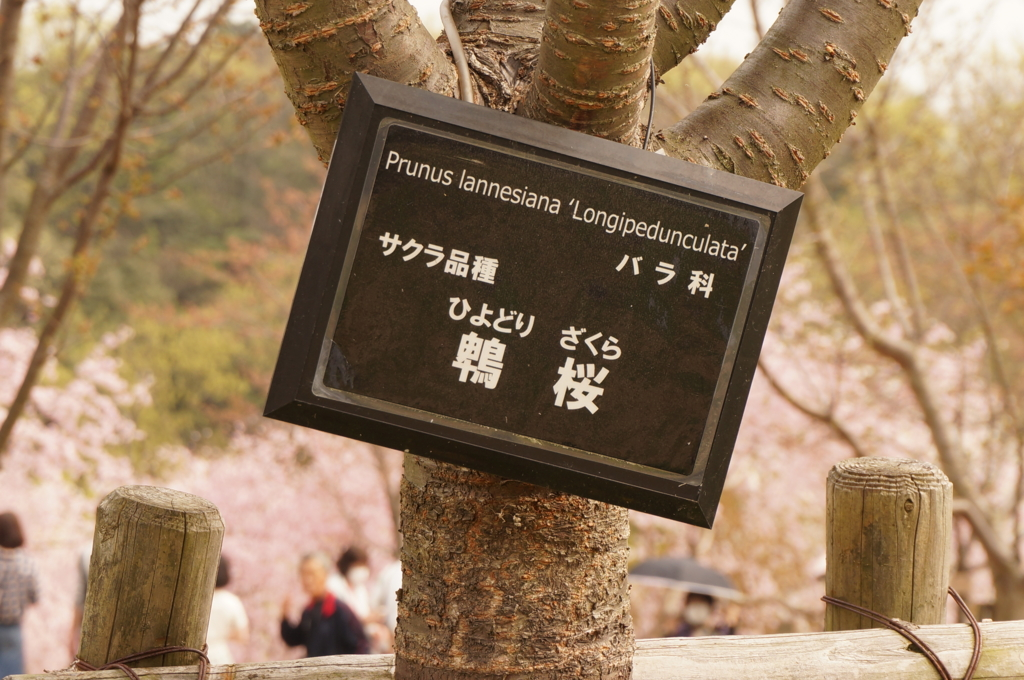 f:id:tomoyoshiyoshi:20160408084536j:plain