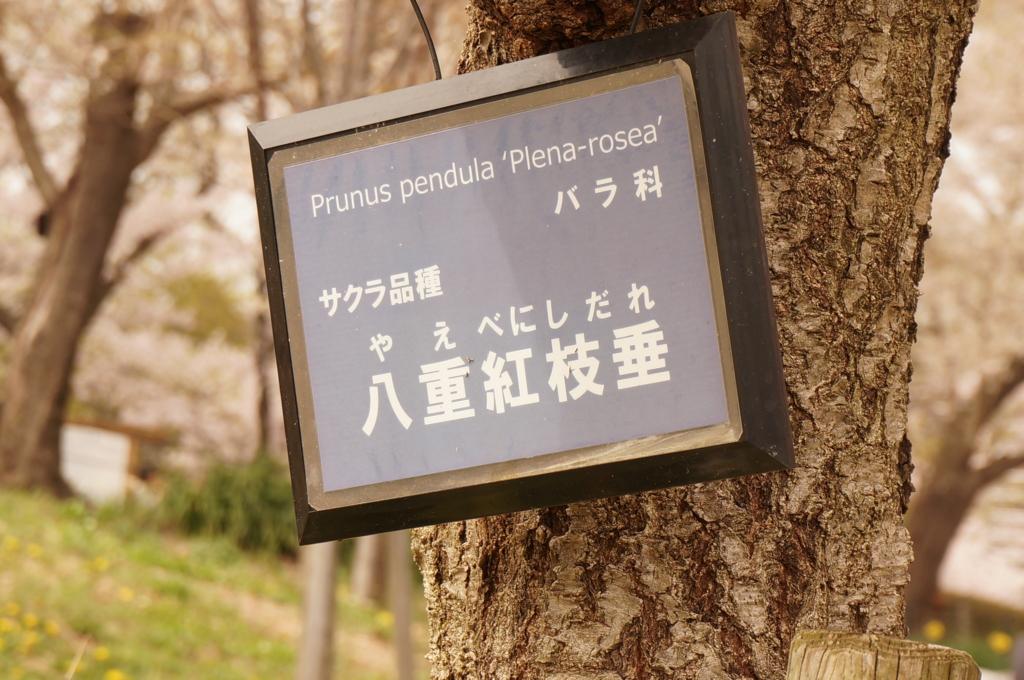 f:id:tomoyoshiyoshi:20160408085240j:plain
