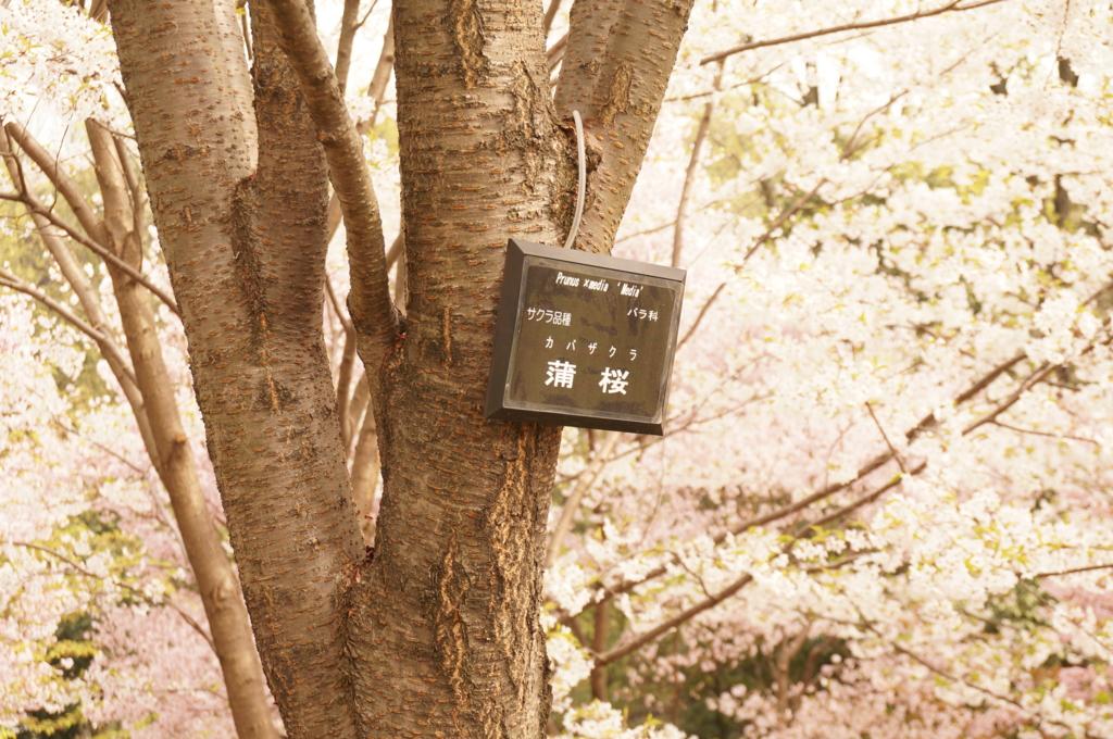 f:id:tomoyoshiyoshi:20160408095123j:plain