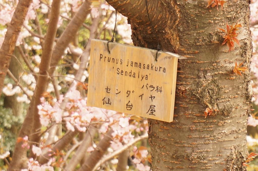f:id:tomoyoshiyoshi:20160408095607j:plain