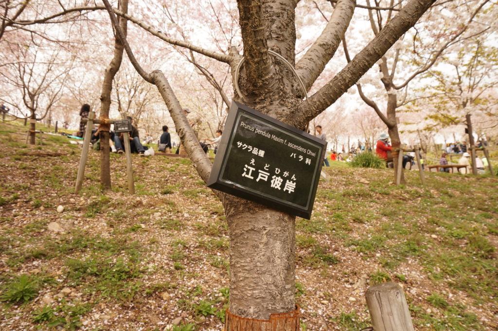 f:id:tomoyoshiyoshi:20160408225356j:plain