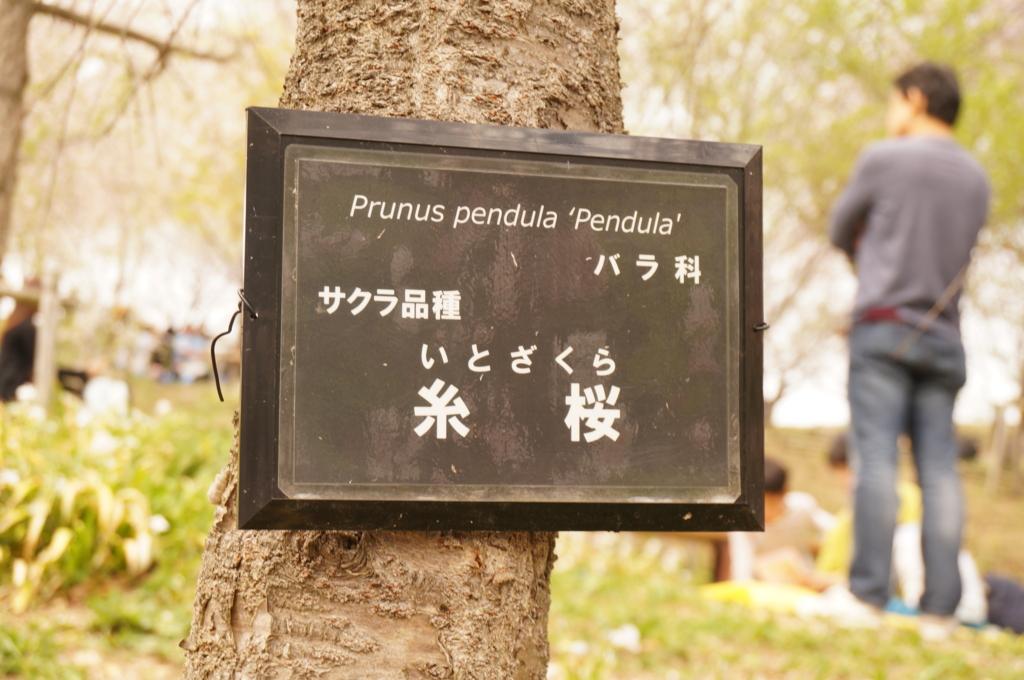 f:id:tomoyoshiyoshi:20160408231105j:plain
