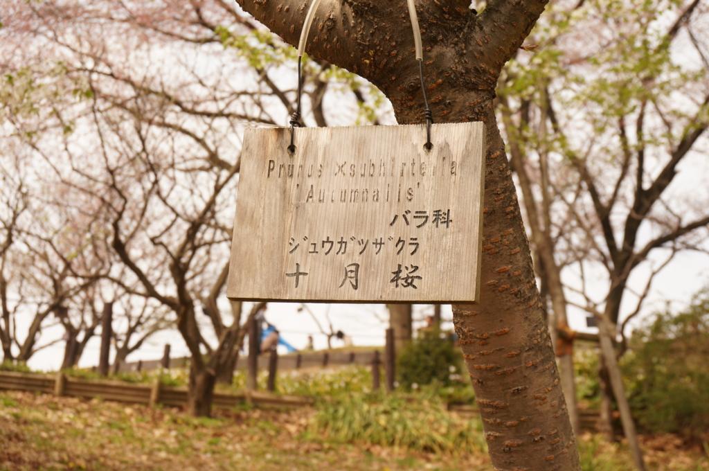 f:id:tomoyoshiyoshi:20160408234635j:plain