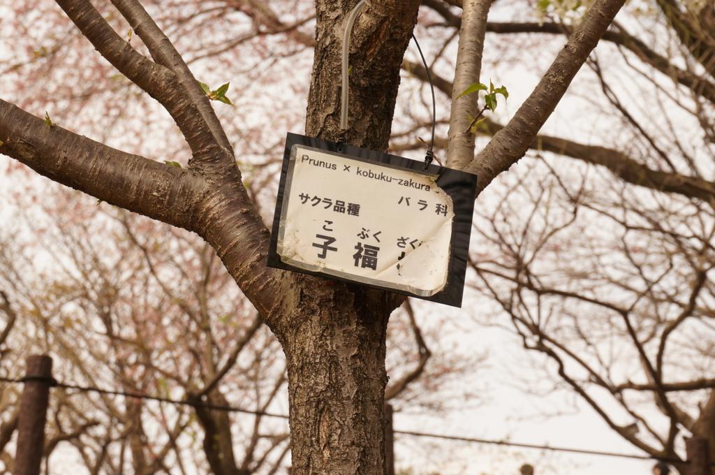 f:id:tomoyoshiyoshi:20160408235002j:plain