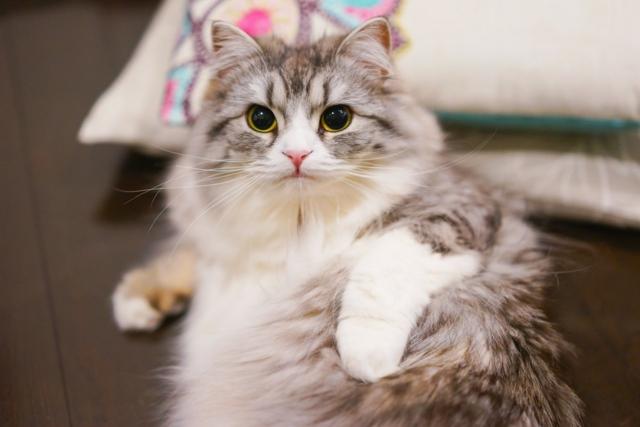 画像圧縮前の猫の写真