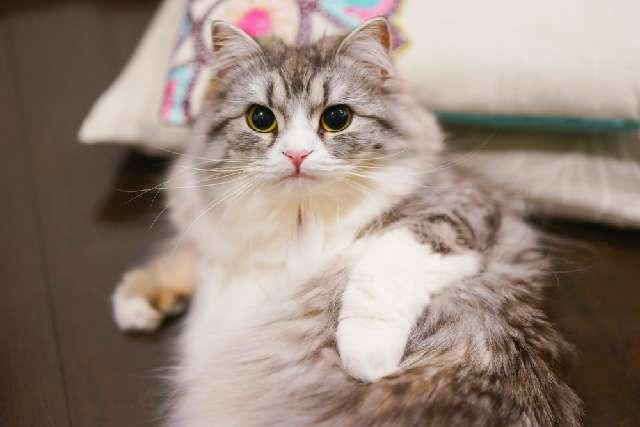画像圧縮後の猫の写真