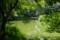 沼のある風景@小石川植物園