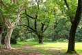 小石川植物園の森
