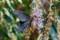 トウフジウツギの花とクロアゲハ