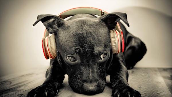 ヘッドフォンをする犬