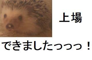 f:id:ton96O:20180329002934j:plain