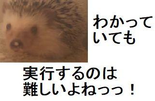 f:id:ton96O:20180430160306j:plain