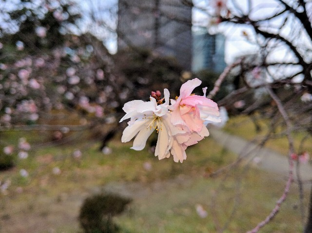 f:id:tonburioyaji:20161220170433j:image