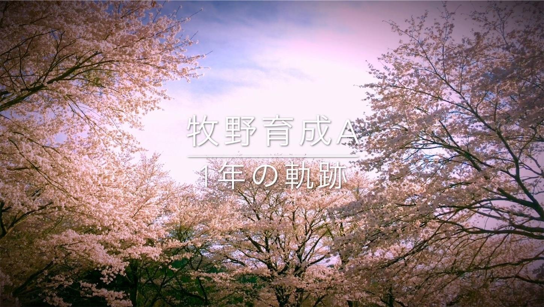 f:id:tondekazu:20170329005833j:image