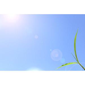 f:id:tongarashi:20180429205332j:plain