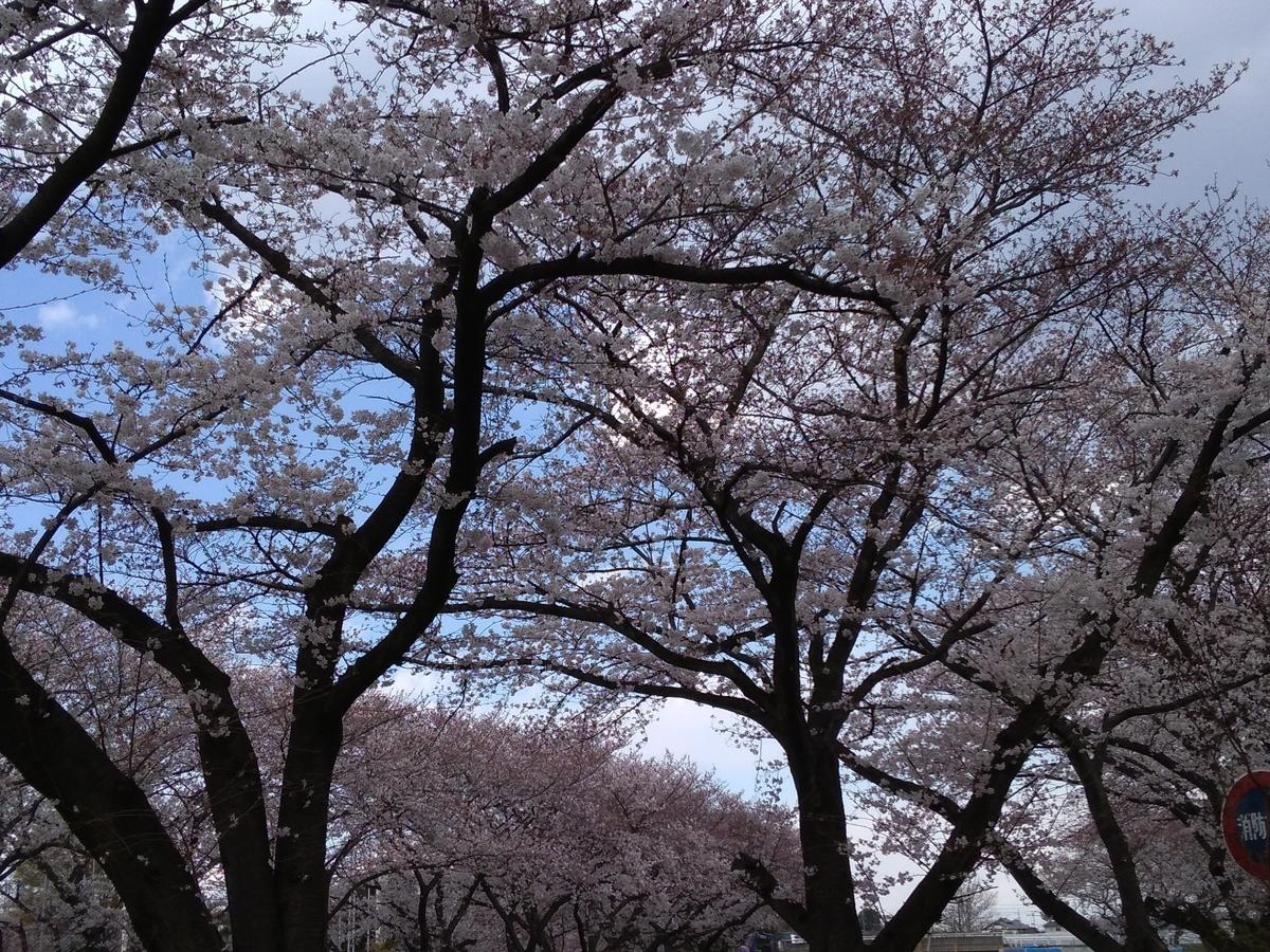 f:id:tongarashi:20190405202130j:plain
