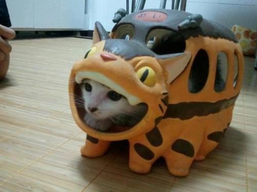 ねこバスの中に猫