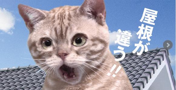 鶴弥のネコ