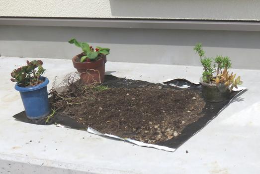 犬走りに干した鉢植え土