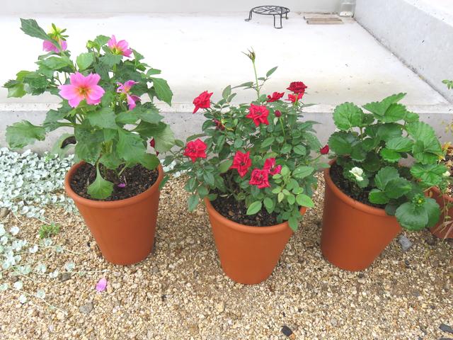 3つ並んだ植木鉢