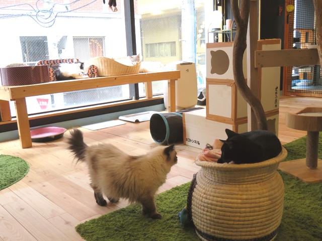 猫がいっぱいいる室内