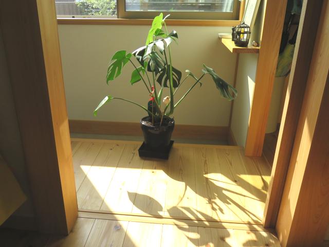 玄関に置かれた植木鉢