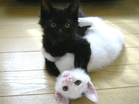 黒猫と白猫が抱き合ってる