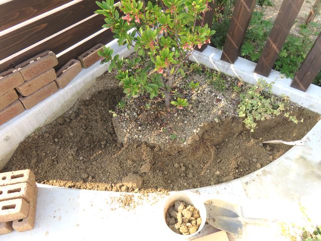 土を掘り起こし中