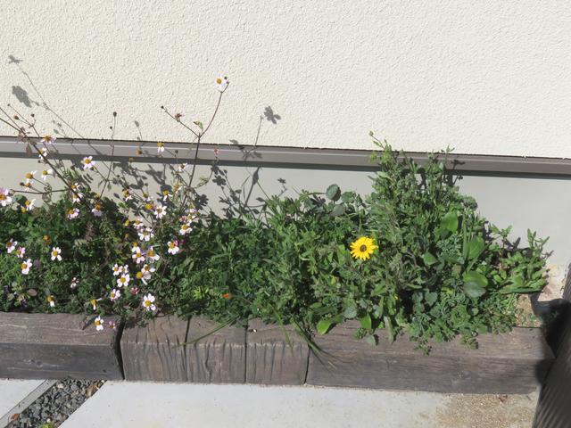 草が茂った花壇