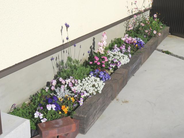 ビオラが満開の生き生きとした花壇