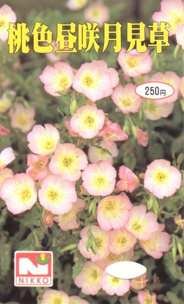 桃色昼咲月見草の種袋