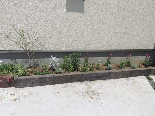 夏の花壇全体