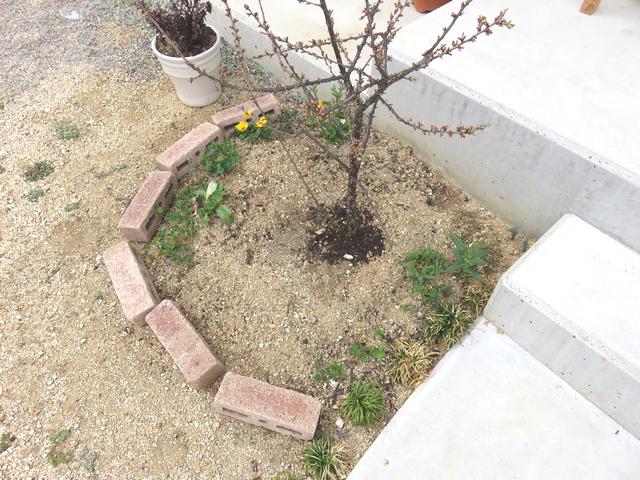 玄関先の花壇ビフォー