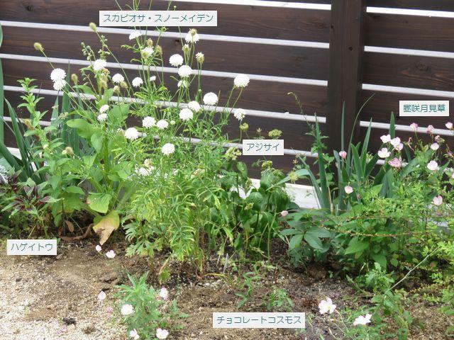 整理した庭