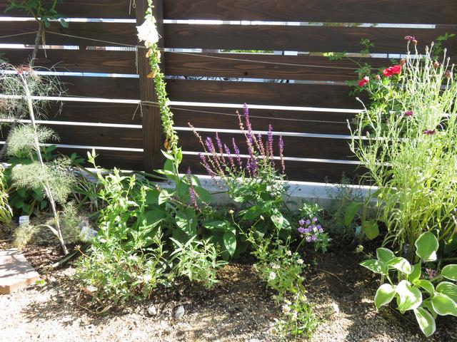 さっぱりした庭